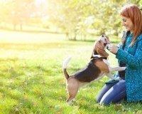 В Самаре появятся специальные площадки для выгула собак
