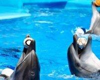 В Самаре откроется дельфинарий