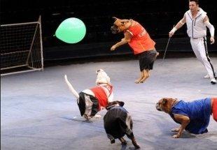 23 декабря в Казани стартуют гастроли московского цирка «Новый год и цирк зверей»