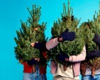 В Екатеринбурге можно будет заказать новогоднюю ёлку через приложение