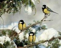 В Уфе пройдет экологический стритарт-квест «Вижу птиц»