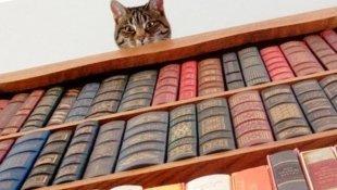 В ВДНХ появилась полка для обмена книгами