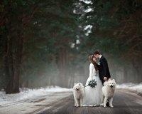 Тюменцев научат делать красивые свадебные фотосессии