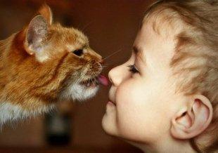 В «Котейной» пройдет Благотворительный котодень