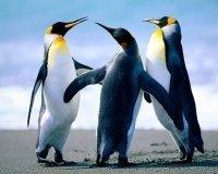 В Драмтеатре зачитают пьесу про пингвинов