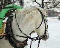 В Измайловском парке открылся конный двор.