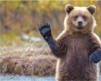 Бурые медведи перебираются в Казань