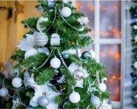 В Казани работает пункт приема новогодних елок
