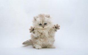 В Сургуте открылись ясли для котят
