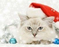 Пройдет международная выставка кошек «РосКошная зима в Сокольниках».