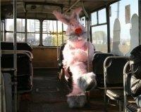 "Сургутским автобусным ""зайцам"" повысят штраф"
