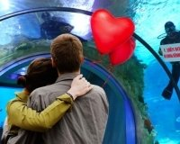 Всех влюбленных ждут в Москвариуме.
