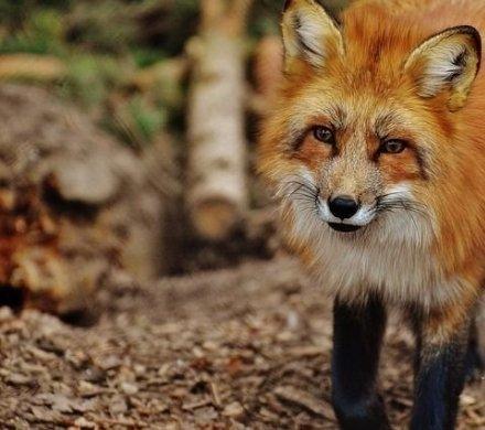 7 самых неподражаемых зоопарков мира