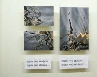 Выставка Сельмы Ансиры откроется в Челнах 22 февраля