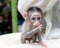 У тюменских мангобеев появилось долгожданное потомство