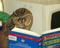 Интеллектуальная «ИграЛось» пройдет в Ижевске
