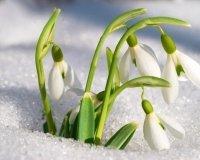 Праздник «Мастерская весны»