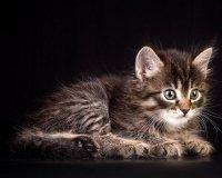 В эту субботу состоится благотворительная выставка-раздача кошек и котят из приюта