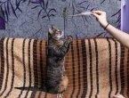 «Фотографируем кошек». Мастер-класс для детей