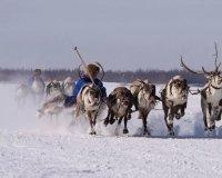 Сургутян приглашают на слет оленеводов