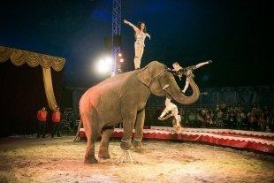 В краснодарском цирке совсем скоро начнется показ новой программы