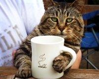 В кофейне New York Coffee пройдёт Котовечер