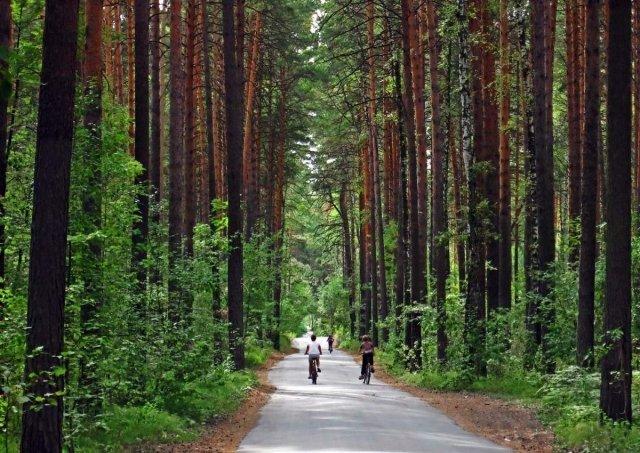 Сургутян просят выбрать вид благоустройства парка «За Саймой»