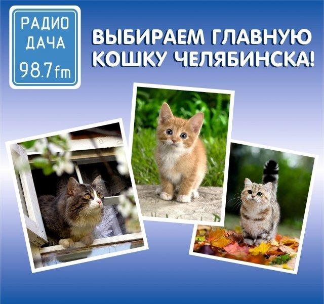 В Челябинске выбирают главную кошку города