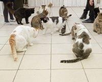 """Креативное пространство """"Королевство кошек"""" закрывается в Тольятти"""