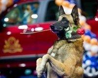 Всепородная Всероссийская выставка собак