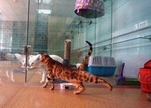 В Сургуте открылась первая гостиница для кошек с люкс-номерами и круглосуточным видеонаблюдением!
