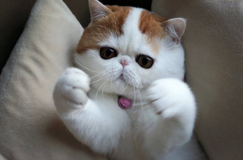 Картинки хочу обнимашек с котиками, взять прикольные