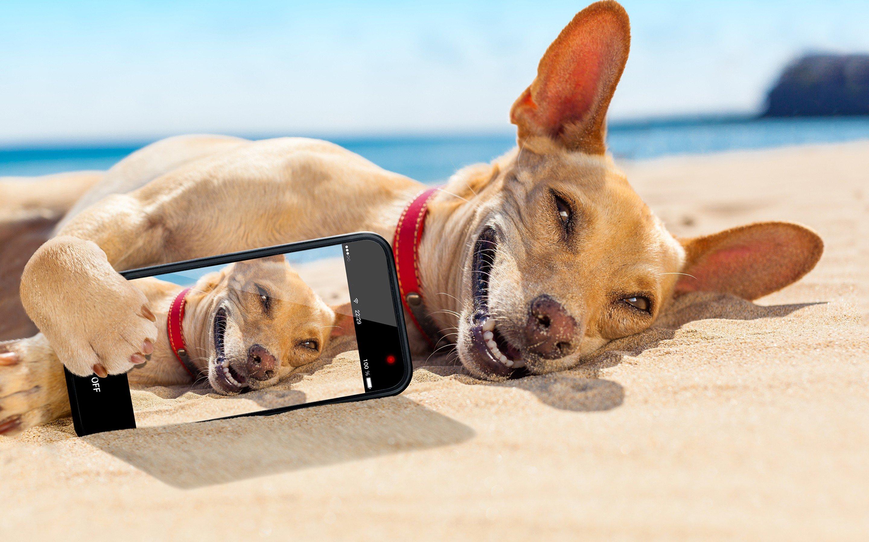 Картинки на телефон про отпуск