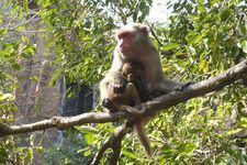 Макаки, валуны, кокосы: 5 мест, которые нужно увидеть на острове Хайнань