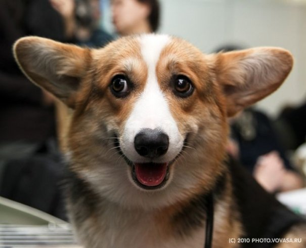Картинки собака с сердечком