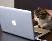 Закон о блогерах вступил в силу: названа первая семерка «счастливчиков»