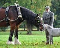 Скоро в Челябинске первая выставка пони и мини-лошадей