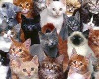 На выходных пройдёт выставка кошек