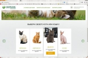 «Сбербанк» открыл доставку котов