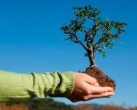 11 октября объявлен День посадки леса в Казани
