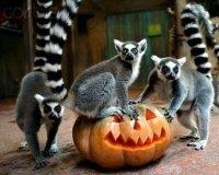 1 ноября зоопарк можно посетить бесплатно, если принести с собой тыкву