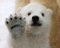 В 2015 году Казанский зооботсад обновят