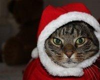 В декабре КОСК «Россия» вместит в себя Деда Мороза и кошек
