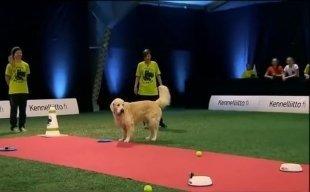 Видео дня: собака смешно провалила соревнования