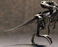 В Югре будут искать кости доисторических морских ящеров и зубы древних акул.