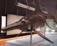 В Югре нашли останки ихтиозавра