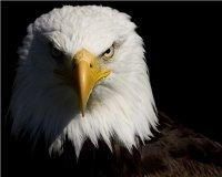 В Астане американцу вручили медаль за организацию учения «Степной орел-2014»