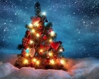 К Новому году в Астане будет установлено 19 елочек!