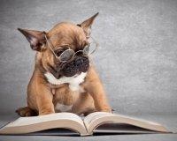 В Тюмени появился читательский цех