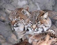 7 декабря Казанский зоопарк отметит день рождения